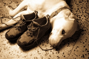 My little dog, a heartbeat at my feet - Edith Wharton